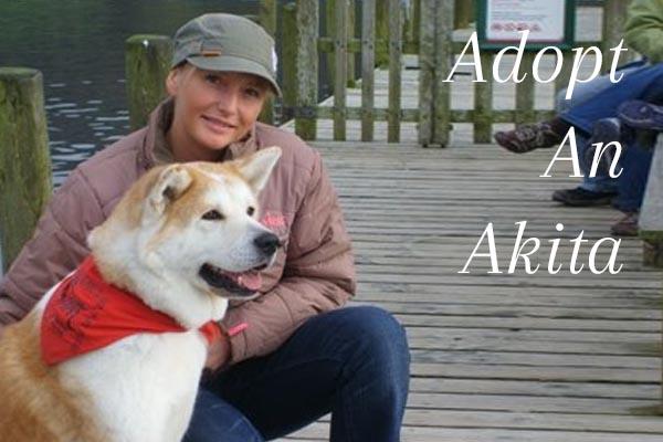 Adopt An Akita