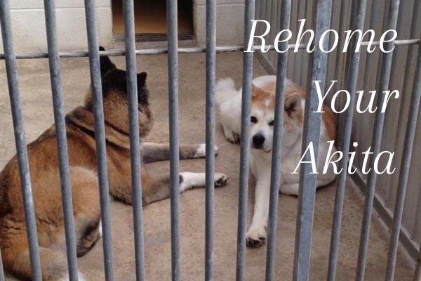 Rehome Your Akita